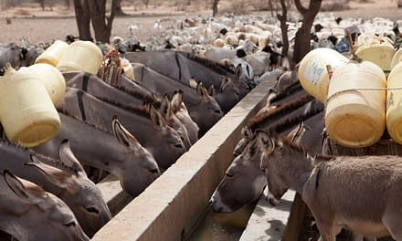 Kenya's National Drought Management Authority trains on the improved Di Monitoring tool