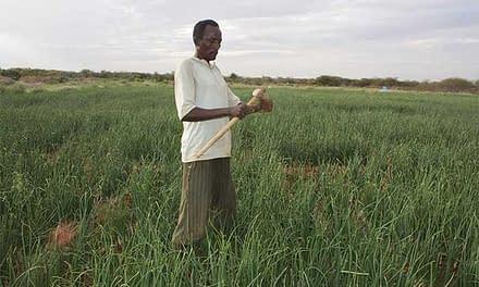 New farming methods help Ali become self-reliant and save his livelihood assets.