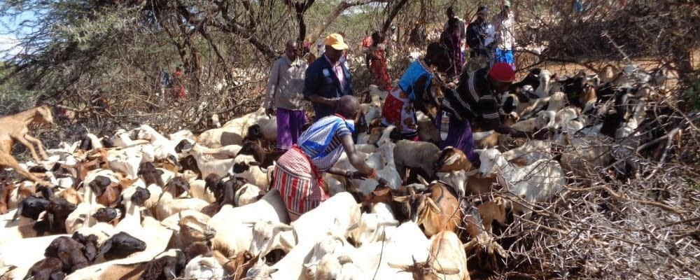 RVF: IGAD and FAO Advise Countries to Remain Vigilant