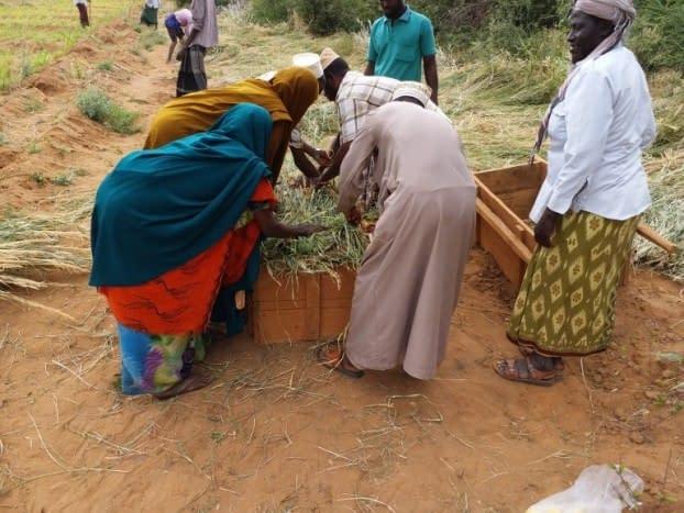 Combatting drought in Kenya through Agro-Pastoralist Field Schools