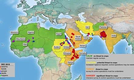 A severe Desert Locust outbreak threatens rural food security across East Africa