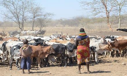 Turkana, Karamojong pastoralists appeal for establishment of regional institutions